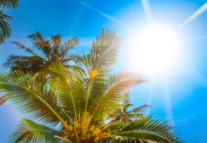 close up of palm tree canopy with sun behind leaves