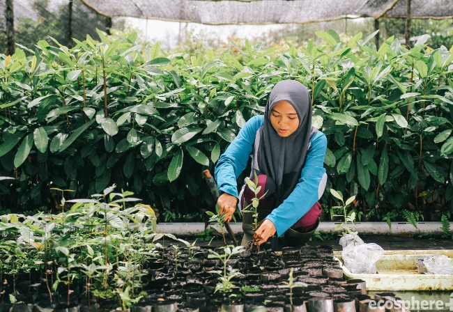 Sumatra Merang Peatland Project offsetting carbon emissions and improving local livelihoods